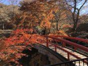 伊香保温泉の紅葉の河鹿橋