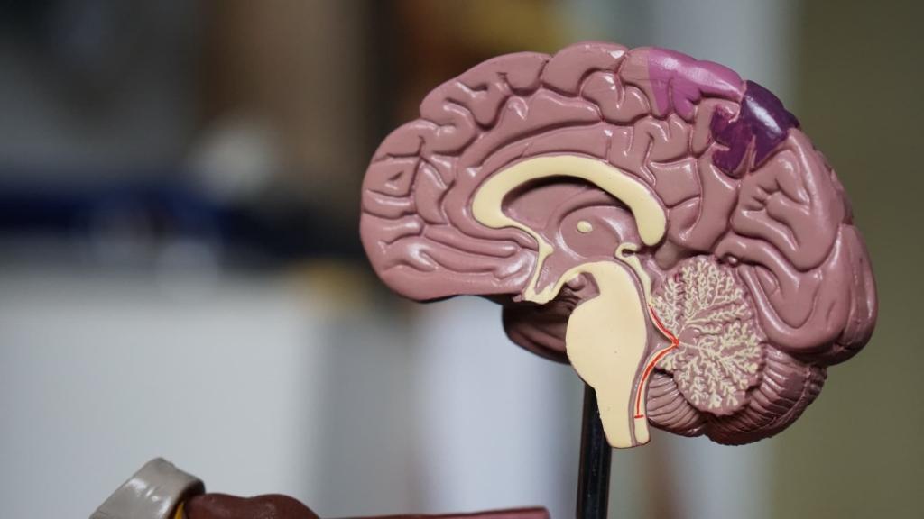女性は脳の構造が将棋に向いていない